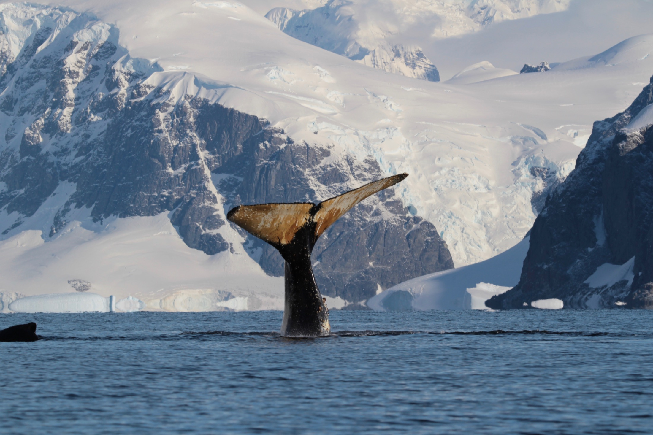 Whales Antarctica
