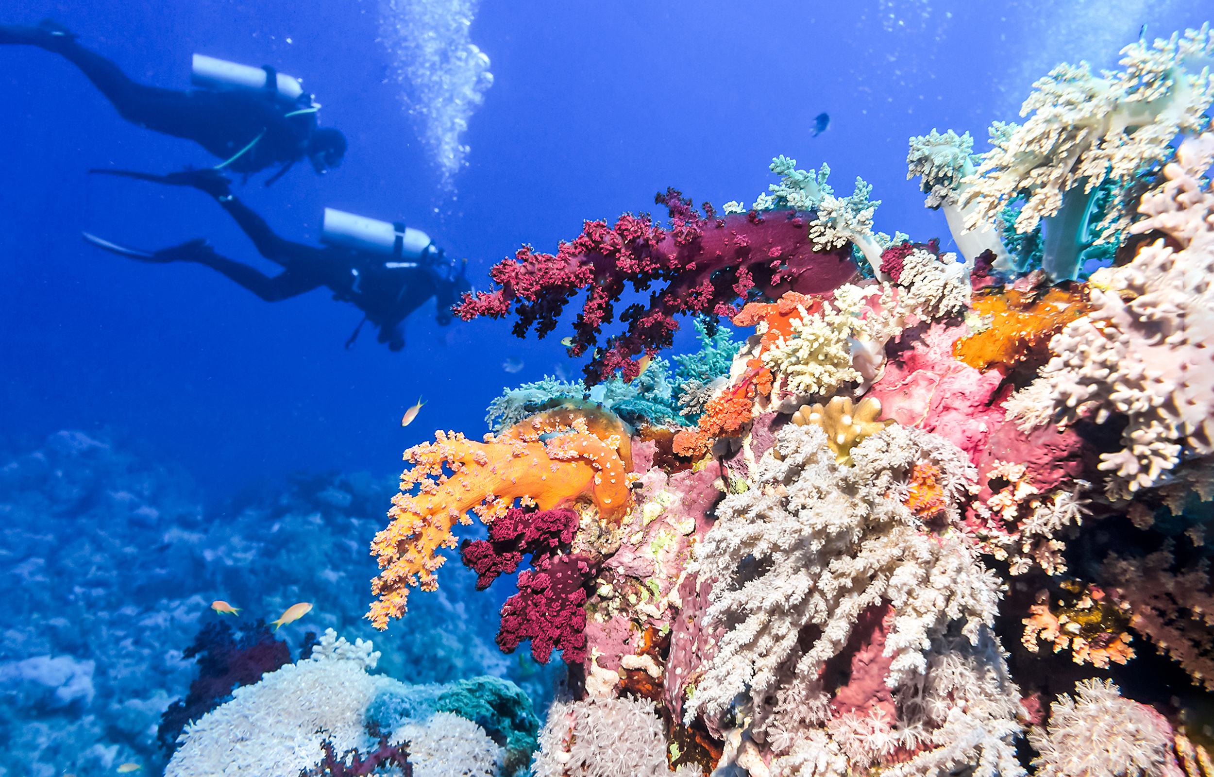 Diving in Barrier Reef