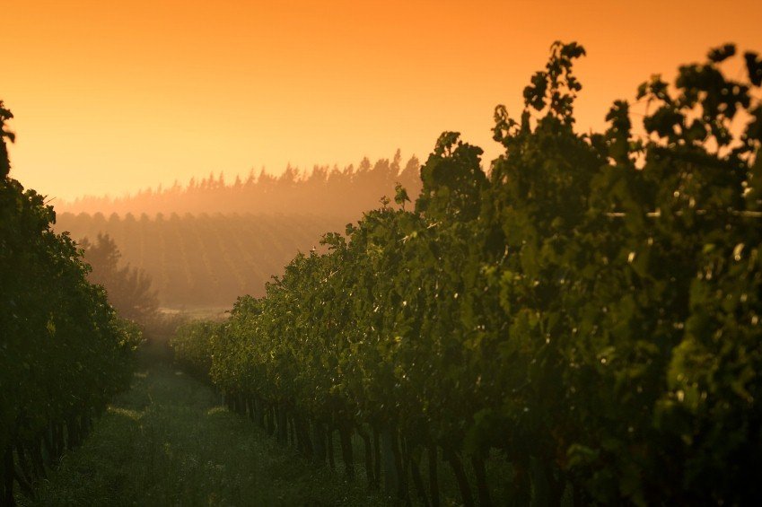 arg05-vineyard-free-istock