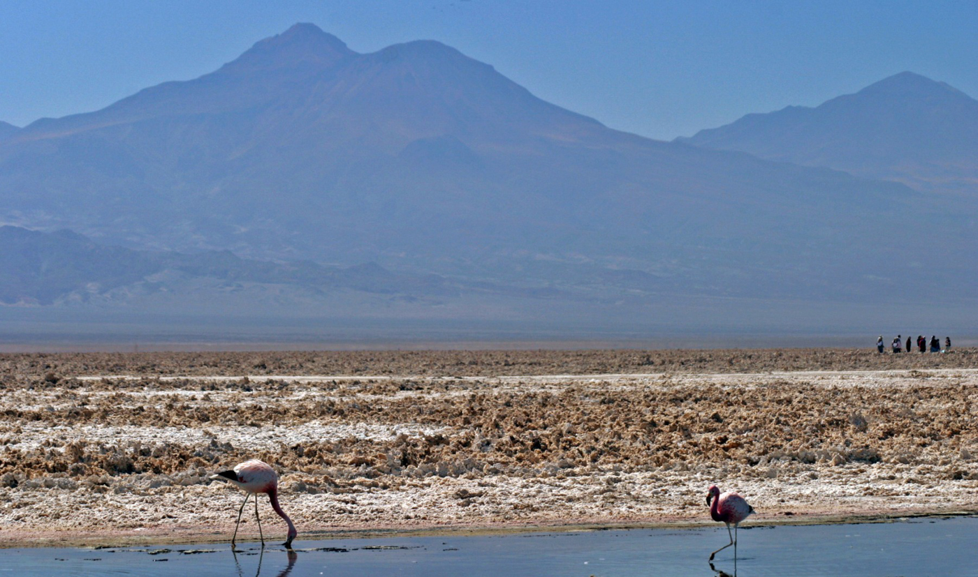 chi50-flamingos-in-the-salt-flats-free-scb