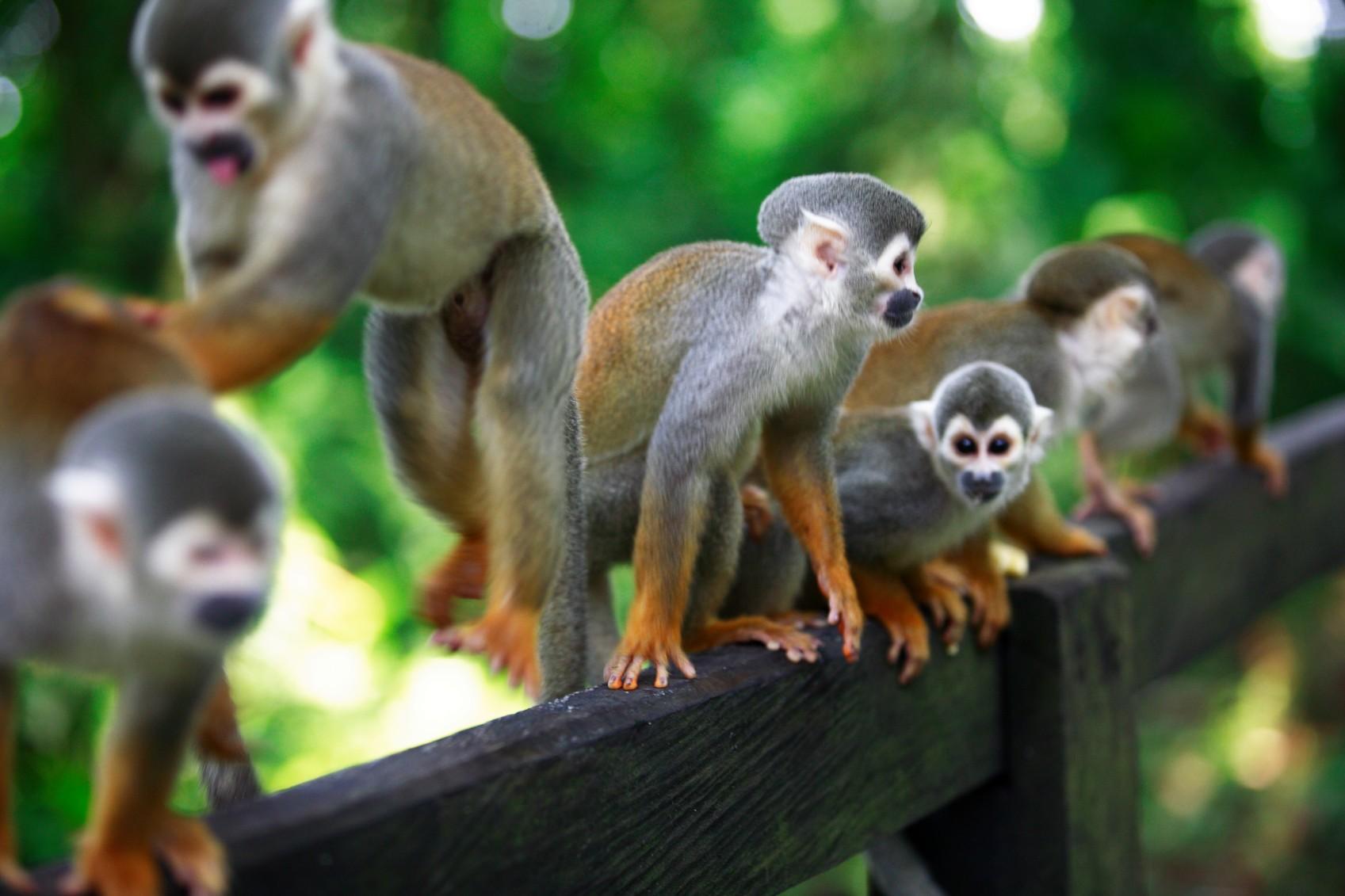 col01-wildlifecolombiaamazon-free-proexport