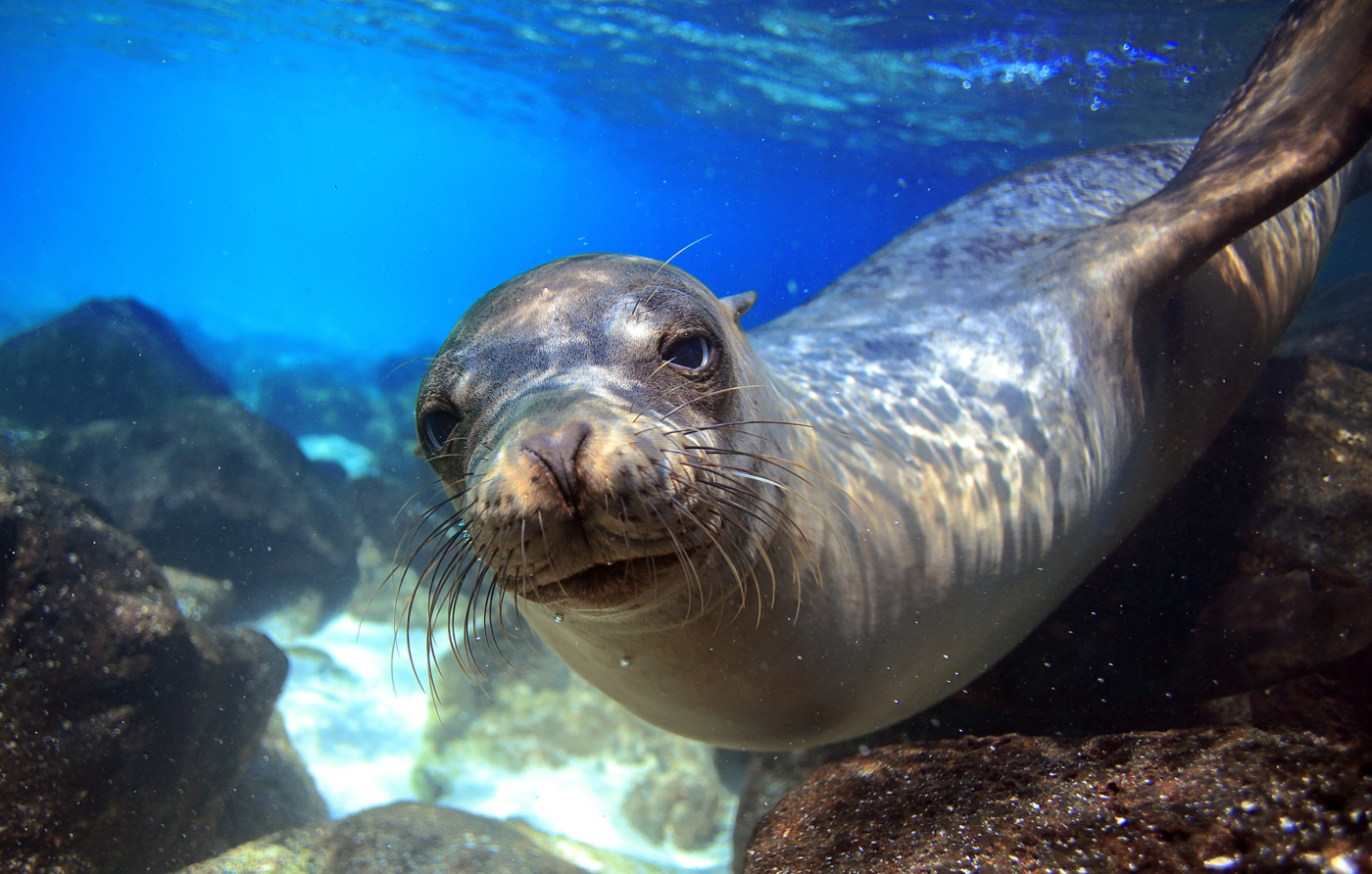 GPS_sealion_shutterstock147144572_freewithcredit