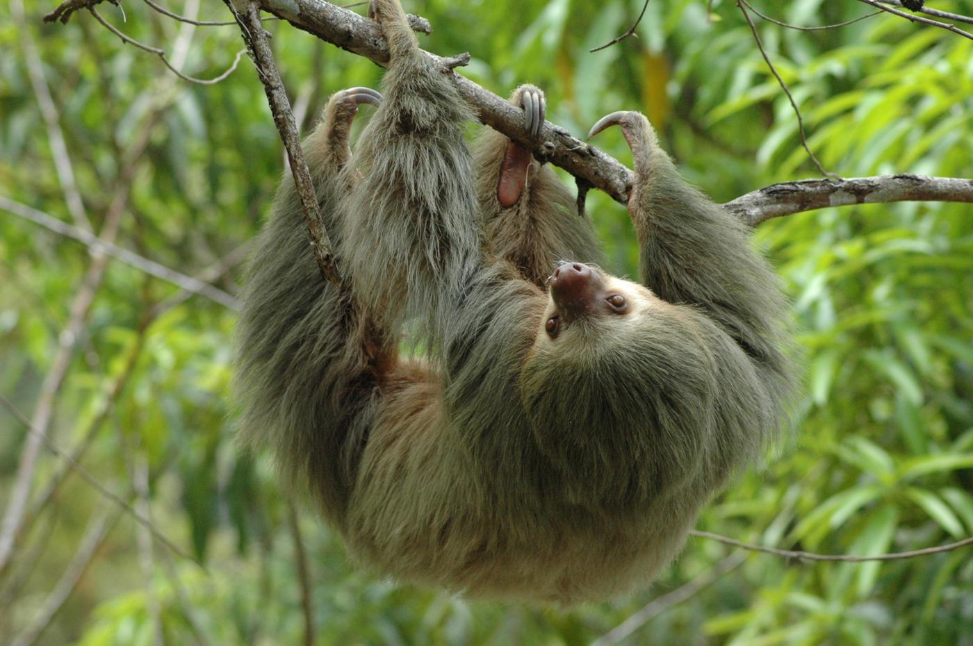 cos09-cano-negro-wildlife-reserve-crreps-free