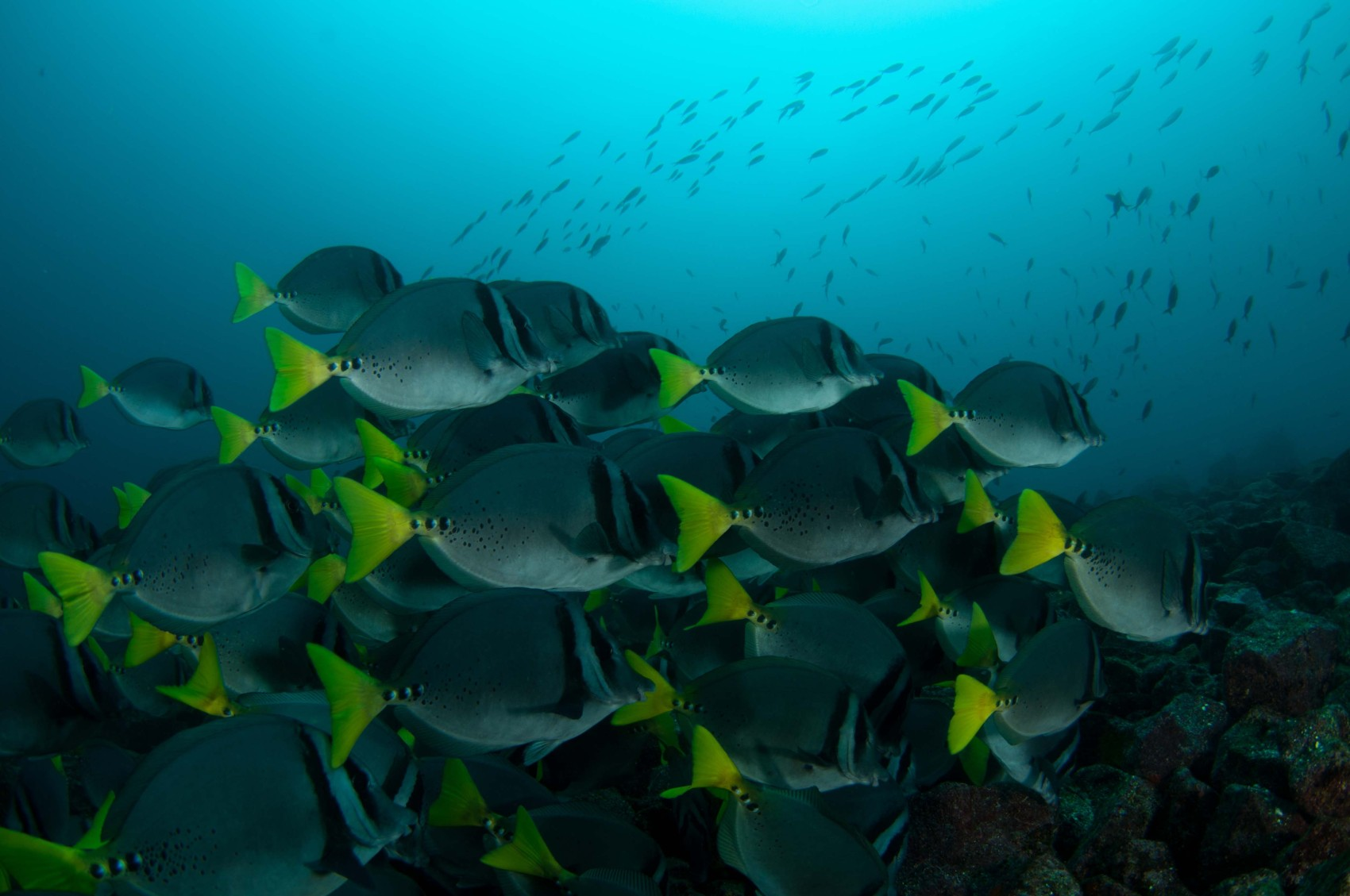 ecu12-diving-in-the-galapagos-metro-free