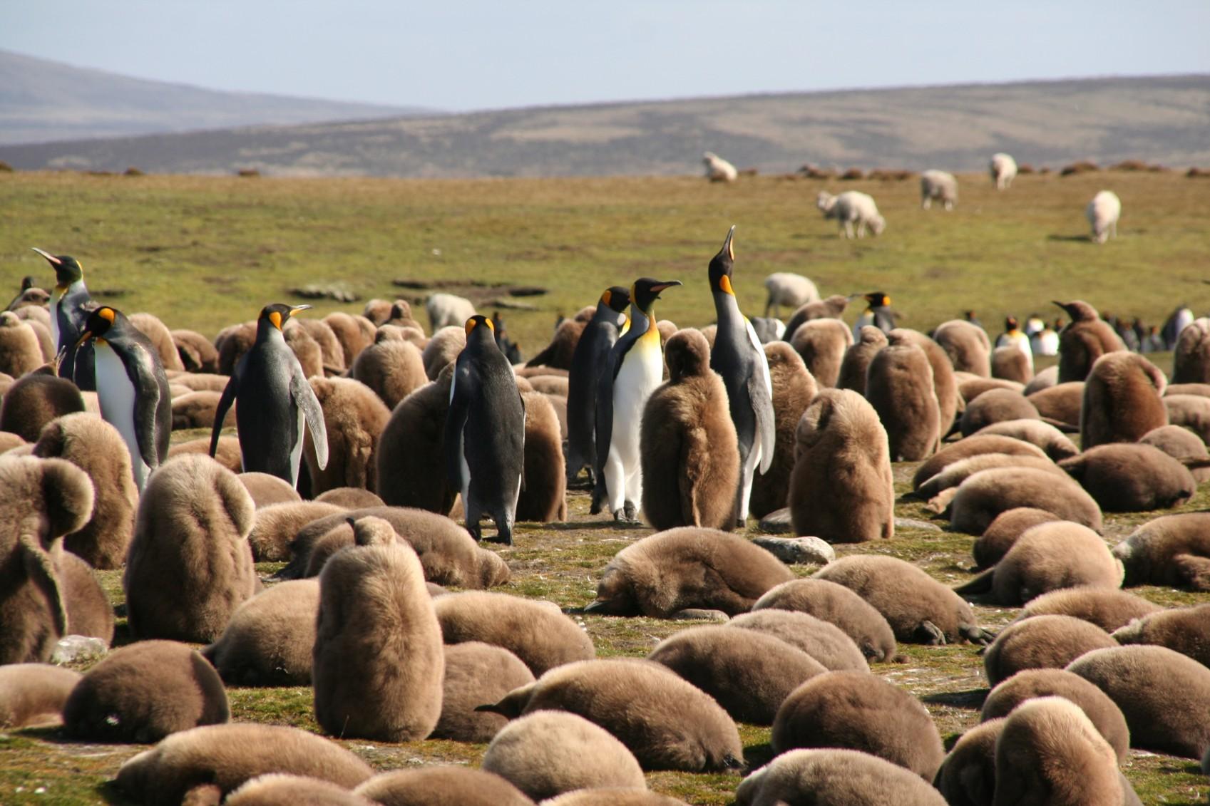 fal01-visit-penguin-colonies-free-bml