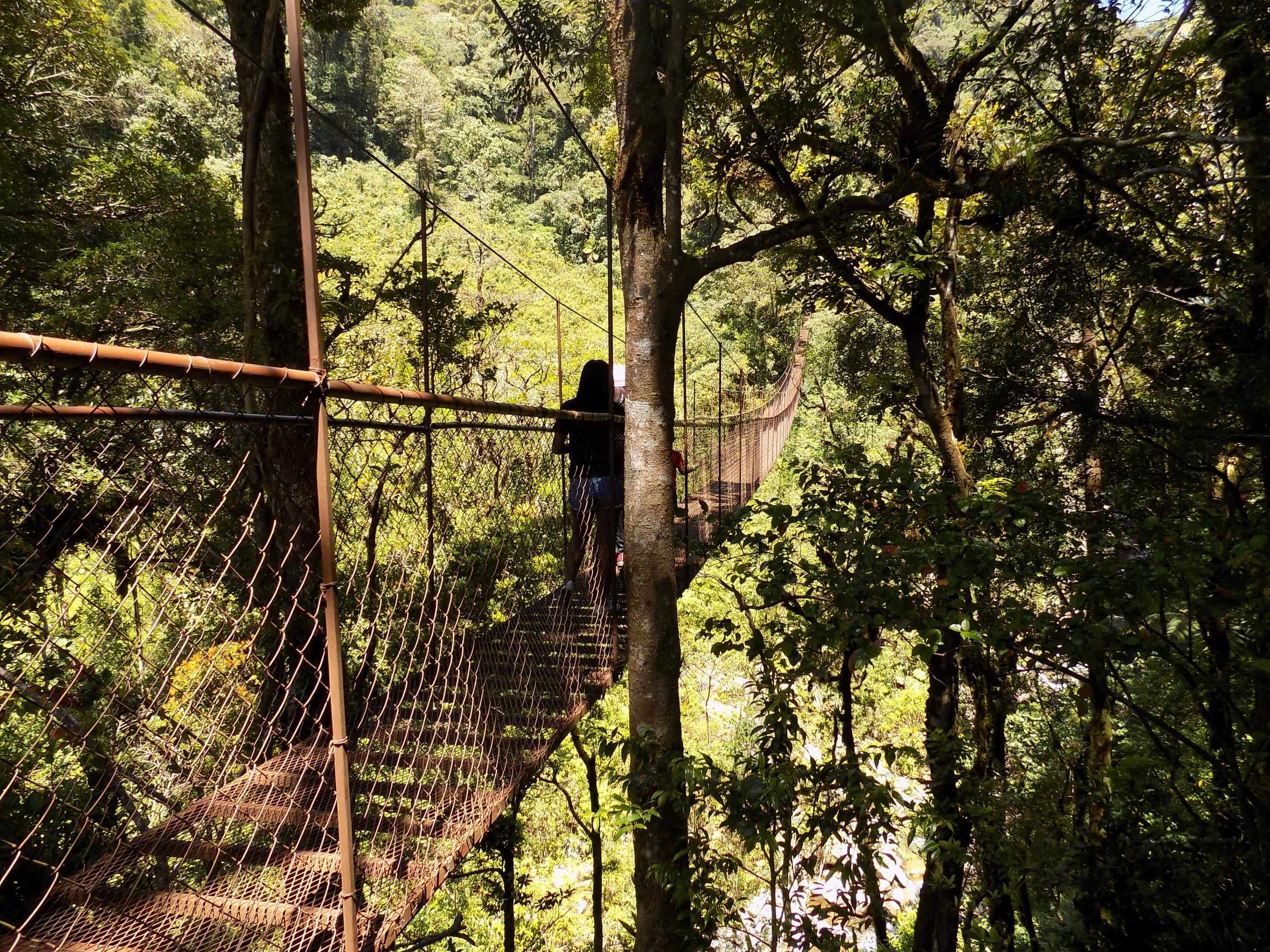 hanging-bridges-and-ziplines
