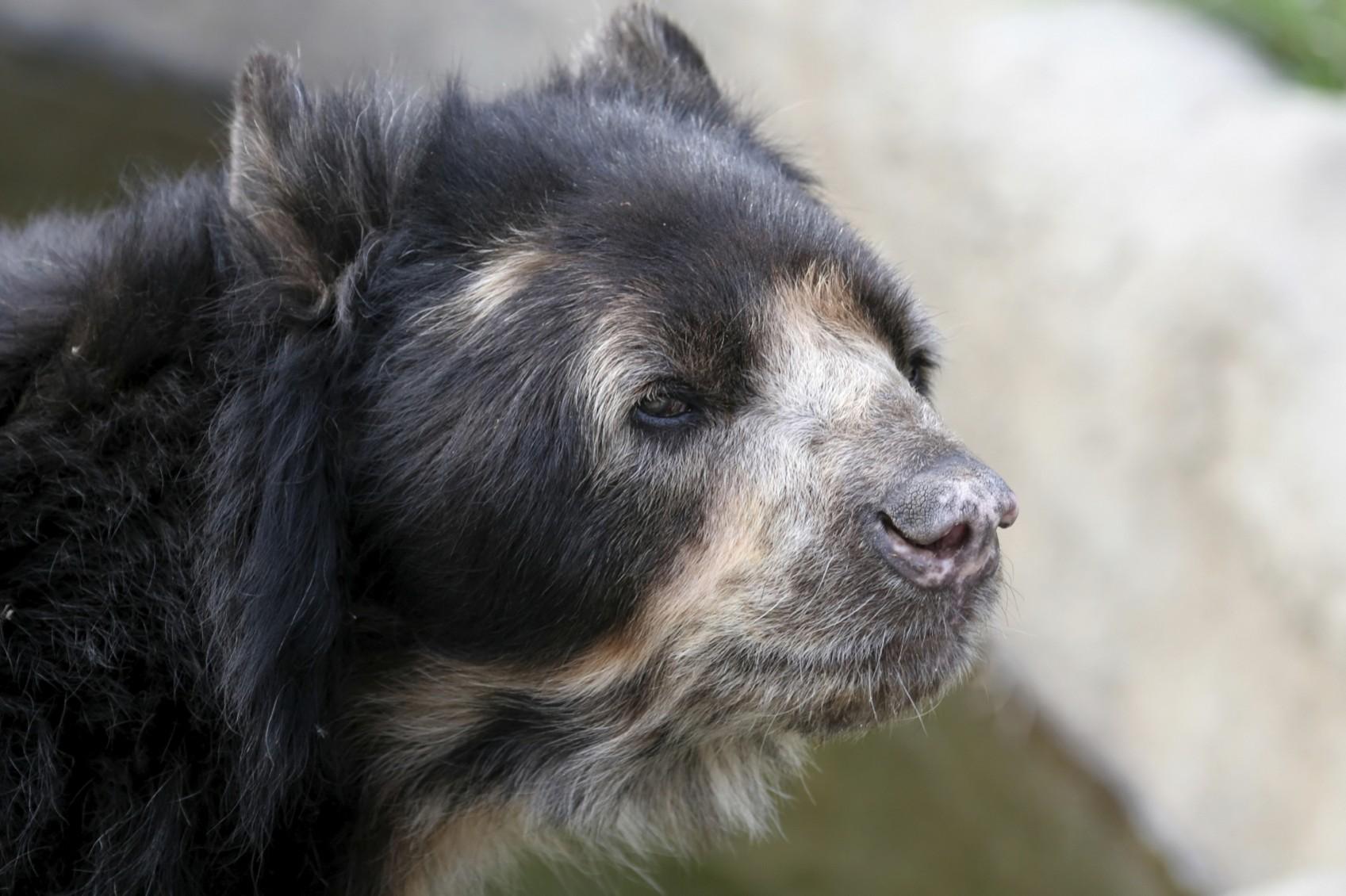 per46-speckeled-bear-free-istock-000001002848